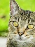 πορτρέτο ανώτερο Υ kuzia ο 12 γατών στοκ φωτογραφία με δικαίωμα ελεύθερης χρήσης
