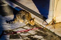 Πορτρέτο γατών αλεών Στοκ φωτογραφία με δικαίωμα ελεύθερης χρήσης