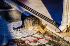 Πορτρέτο γατών αλεών Στοκ Εικόνες