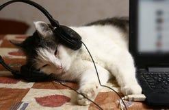 Πορτρέτο γατών στα ακουστικά και το lap-top Στοκ φωτογραφία με δικαίωμα ελεύθερης χρήσης