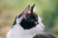 Πορτρέτο γατών στον κήπο Στοκ εικόνα με δικαίωμα ελεύθερης χρήσης