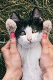 Πορτρέτο γατών στον κήπο Στοκ εικόνες με δικαίωμα ελεύθερης χρήσης