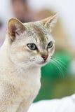 πορτρέτο γατών Στοκ Εικόνες