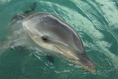 πορτρέτο δελφινιών Στοκ φωτογραφία με δικαίωμα ελεύθερης χρήσης