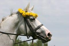 Πορτρέτο ενός άσπρου αλόγου Στοκ Φωτογραφίες