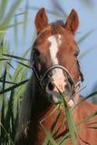 Πορτρέτο ενός αλόγου στοκ φωτογραφία με δικαίωμα ελεύθερης χρήσης