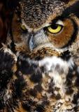 Πορτρέτο ενός αρπακτικού ζώου Στοκ Εικόνες
