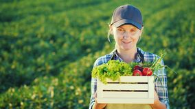 Πορτρέτο ενός θηλυκού αγρότη που στέκεται στον τομέα, που κρατά ένα κιβώτιο με ένα σύνολο φρέσκων λαχανικών γεωργία οργανική απόθεμα βίντεο