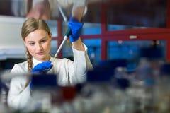 Πορτρέτο ενός θηλυκού ερευνητή σε ένα εργαστήριο χημείας στοκ εικόνες