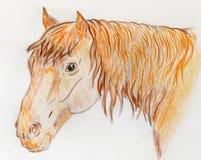 Πορτρέτο ενός κόκκινου αλόγου που σύρεται με τα χρωματισμένα μολύβια στοκ φωτογραφία με δικαίωμα ελεύθερης χρήσης