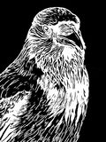 Πορτρέτο ενός κόρακα σε μια άσπρη ξυλογραφία ή ένα εκλεκτής ποιότητας ύφος χάραξης Στοκ φωτογραφία με δικαίωμα ελεύθερης χρήσης