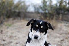 Πορτρέτο ενός περιπλανώμενου σκυλιού Στοκ εικόνα με δικαίωμα ελεύθερης χρήσης