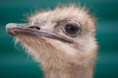 Πορτρέτο ενός πουλιού Στοκ φωτογραφία με δικαίωμα ελεύθερης χρήσης