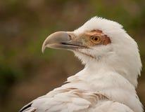 Πορτρέτο ενός πουλιού Στοκ Φωτογραφίες