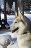 Πορτρέτο ενός σκυλιού στο σχεδιάγραμμα Στοκ Φωτογραφίες