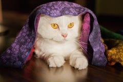 Πορτρέτο ενός χαριτωμένου άσπρου γατακιού Στοκ Φωτογραφίες