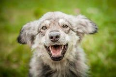 Πορτρέτο ενός χαρούμενου σκυλιού στη χλόη Στοκ φωτογραφίες με δικαίωμα ελεύθερης χρήσης