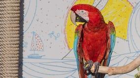 Πορτρέτο ερυθρού Macaw Στοκ Εικόνες