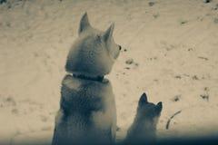 Πορτρέτο κινηματογραφήσεων σε πρώτο πλάνο δύο σιβηρικό γεροδεμένο σκυλιών γραπτό στοκ φωτογραφίες