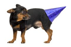Πορτρέτο λίγου σκυλιού Στοκ φωτογραφία με δικαίωμα ελεύθερης χρήσης