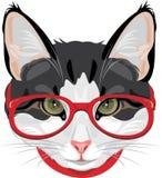 Πορτρέτο μιας αστείας γάτας με τα κόκκινα γυαλιά Στοκ εικόνες με δικαίωμα ελεύθερης χρήσης