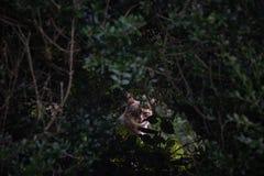 Πορτρέτο μιας γάτας μέσω της βλάστησης σε μια αγροτική ρύθμιση στοκ φωτογραφία