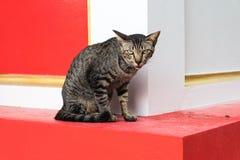 Πορτρέτο μιας γάτας Στοκ εικόνες με δικαίωμα ελεύθερης χρήσης