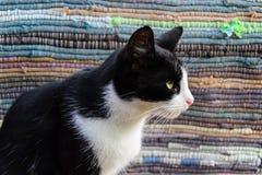 Πορτρέτο μιας γάτας Στοκ Εικόνα