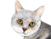 Πορτρέτο μιας γκρίζας γάτας Σκωτσέζικη γάτα η διακοσμητική εικόνα απεικόνισης πετάγματος ραμφών το κομμάτι εγγράφου της καταπίνει στοκ φωτογραφίες με δικαίωμα ελεύθερης χρήσης