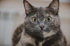 Πορτρέτο μιας ζωηρόχρωμης γάτας Στοκ Εικόνα