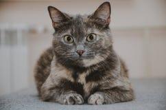 Πορτρέτο μιας ζωηρόχρωμης γάτας Στοκ φωτογραφίες με δικαίωμα ελεύθερης χρήσης