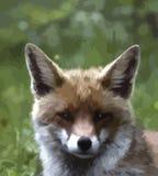 Πορτρέτο μιας νέας αλεπούς σε ένα πράσινο υπόβαθρο, επεξηγηματικό σχέδιο διανυσματική απεικόνιση