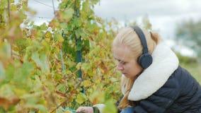 Πορτρέτο μιας νέας γυναίκας που εργάζεται στον αμπελώνα και το άκουσμα στη μουσική στα ακουστικά Περικοπές με τις δέσμες ψαλιδιού φιλμ μικρού μήκους