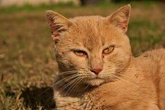 Πορτρέτο μιας πορτοκαλιάς γάτας στη φύση Στοκ φωτογραφίες με δικαίωμα ελεύθερης χρήσης