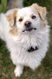 Πορτρέτο μιας συνεδρίασης σκυλιών στη χλόη Στοκ εικόνα με δικαίωμα ελεύθερης χρήσης