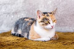 Πορτρέτο μιας όμορφης ζωηρόχρωμης γάτας στοκ φωτογραφία