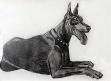 Πορτρέτο μιας όμορφης φυλής Doberman σκυλιών στοκ φωτογραφία