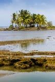 Πορτρέτο νησιών Καραϊβικής Στοκ Εικόνες