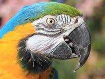 Πορτρέτο παπαγάλων Στοκ Φωτογραφία