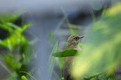 Πορτρέτο πουλιών Στοκ φωτογραφίες με δικαίωμα ελεύθερης χρήσης