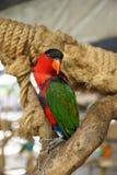 Πορτρέτο πουλιών παπαγάλων Στοκ Φωτογραφία