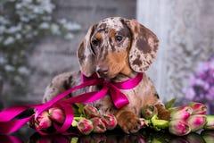 πορτρέτο σκυλιών και τουλίπες λουλουδιών στοκ φωτογραφίες