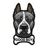 Πορτρέτο σκυλιών τεριέ Staffordshire αποστεωμένη Καλή εγγραφή αγοριών διάνυσμα απεικόνιση αποθεμάτων