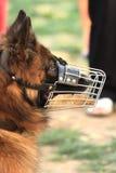 πορτρέτο σκυλιών Στοκ εικόνα με δικαίωμα ελεύθερης χρήσης