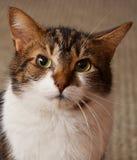 Πορτρέτο της Pet Στοκ φωτογραφίες με δικαίωμα ελεύθερης χρήσης