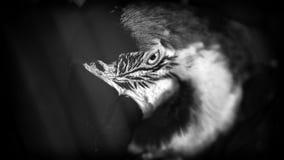 Πορτρέτο τέχνης ενός παπαγάλου Στοκ Φωτογραφία