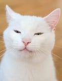 Πορτρέτο της άσπρης αστείας γάτας Στοκ εικόνα με δικαίωμα ελεύθερης χρήσης
