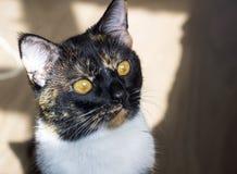 Πορτρέτο της γάτας Στοκ φωτογραφίες με δικαίωμα ελεύθερης χρήσης