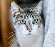 Πορτρέτο της γάτας Στοκ φωτογραφία με δικαίωμα ελεύθερης χρήσης