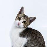 Πορτρέτο της γάτας Στοκ εικόνα με δικαίωμα ελεύθερης χρήσης